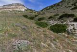 1363 Une semaine en Corse du sud - A week in south Corsica -  IMG_9275_DxO Pbase.jpg