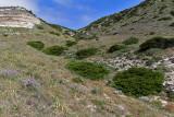 1364 Une semaine en Corse du sud - A week in south Corsica -  IMG_9276_DxO Pbase.jpg
