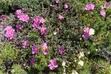 1376 Une semaine en Corse du sud - A week in south Corsica -  IMG_9288_DxO Pbase.jpg