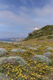 1379 Une semaine en Corse du sud - A week in south Corsica -  IMG_9291_DxO Pbase.jpg