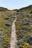 1384 Une semaine en Corse du sud - A week in south Corsica -  IMG_9296_DxO Pbase.jpg