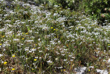 1606 Une semaine en Corse du sud - A week in south Corsica -  IMG_9525_DxO Pbase.jpg