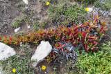 1663 Une semaine en Corse du sud - A week in south Corsica -  IMG_9581_DxO Pbase.jpg