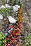 1664 Une semaine en Corse du sud - A week in south Corsica -  IMG_9582_DxO Pbase.jpg