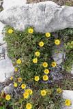 1665 Une semaine en Corse du sud - A week in south Corsica -  IMG_9583_DxO Pbase.jpg
