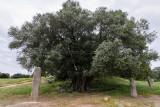 1851 Une semaine en Corse du sud - A week in south Corsica -  IMG_9771_DxO Pbase.jpg