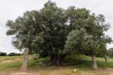 1852 Une semaine en Corse du sud - A week in south Corsica -  IMG_9772_DxO Pbase.jpg