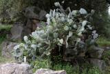 1864 Une semaine en Corse du sud - A week in south Corsica -  IMG_9785_DxO Pbase.jpg