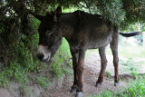 1881 Une semaine en Corse du sud - A week in south Corsica -  IMG_9802_DxO Pbase.jpg
