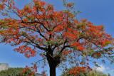 710 Mauritius island - Ile Maurice 2014 - IMG_5138_DxO Pbase.jpg