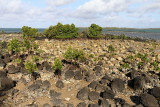 746 Mauritius island - Ile Maurice 2014 - IMG_5177_DxO Pbase.jpg