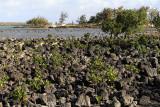 749 Mauritius island - Ile Maurice 2014 - IMG_5180_DxO Pbase.jpg