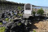 757 Mauritius island - Ile Maurice 2014 - IMG_5188_DxO Pbase.jpg