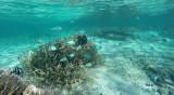 1 Mauritius island - Ile Maurice 2014 - G0011178_DxO Pbase.jpg