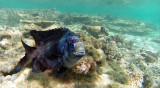 12 Mauritius island - Ile Maurice 2014 - G0121234_DxO Pbase.jpg