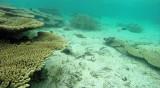 131 Mauritius island - Ile Maurice 2014 - G0681566_DxO Pbase.jpg