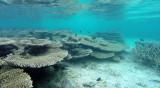 133 Mauritius island - Ile Maurice 2014 - G0681568_DxO Pbase.jpg