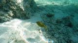 15 Mauritius island - Ile Maurice 2014 - G0161247_DxO Pbase.jpg