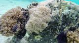 27 Mauritius island - Ile Maurice 2014 - G0211280_DxO Pbase.jpg