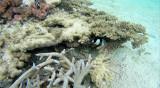 33 Mauritius island - Ile Maurice 2014 - G0241300_DxO Pbase.jpg