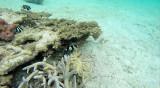 36 Mauritius island - Ile Maurice 2014 - G0261311_DxO Pbase.jpg