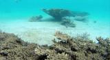 43 Mauritius island - Ile Maurice 2014 - G0291329_DxO Pbase.jpg