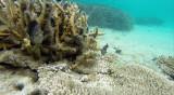 47 Mauritius island - Ile Maurice 2014 - G0311338_DxO Pbase.jpg
