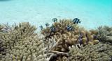 49 Mauritius island - Ile Maurice 2014 - G0321344_DxO Pbase.jpg