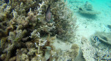 54 Mauritius island - Ile Maurice 2014 - G0361356_DxO Pbase.jpg