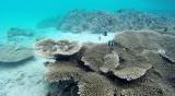 56 Mauritius island - Ile Maurice 2014 - G0381366_DxO Pbase.jpg
