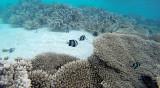 57 Mauritius island - Ile Maurice 2014 - G0381367_DxO Pbase.jpg