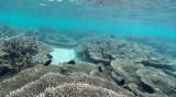 59 Mauritius island - Ile Maurice 2014 - G0411379_DxO Pbase.jpg
