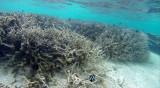 63 Mauritius island - Ile Maurice 2014 - G0411386_DxO Pbase.jpg