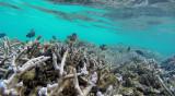 66 Mauritius island - Ile Maurice 2014 - G0421390_DxO Pbase.jpg
