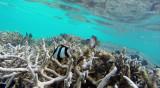 69 Mauritius island - Ile Maurice 2014 - G0421393_DxO Pbase.jpg