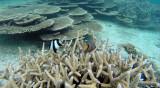 89 Mauritius island - Ile Maurice 2014 - G0531454_DxO Pbase.jpg