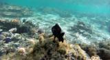 9 Mauritius island - Ile Maurice 2014 - G0111227_DxO Pbase.jpg