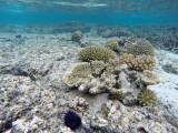 145 Mauritius island - Ile Maurice 2014 - GOPR1591_DxO Pbase.jpg