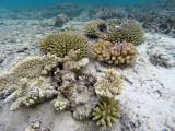146 Mauritius island - Ile Maurice 2014 - GOPR1593_DxO Pbase.jpg