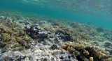 162 Mauritius island - Ile Maurice 2014 - G0771623_DxO Pbase.jpg