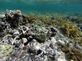 189 Mauritius island - Ile Maurice 2014 - GOPR1676_DxO Pbase.jpg