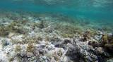195 Mauritius island - Ile Maurice 2014 - G0831687_DxO Pbase.jpg