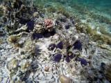 197 Mauritius island - Ile Maurice 2014 - GOPR1692_DxO Pbase.jpg