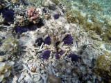 198 Mauritius island - Ile Maurice 2014 - GOPR1693_DxO Pbase.jpg