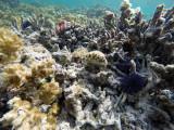 205 Mauritius island - Ile Maurice 2014 - GOPR1701_DxO Pbase.jpg