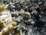 206 Mauritius island - Ile Maurice 2014 - GOPR1702_DxO Pbase.jpg