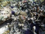 209 Mauritius island - Ile Maurice 2014 - GOPR1705_DxO Pbase.jpg
