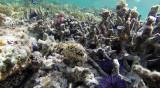 212 Mauritius island - Ile Maurice 2014 - G0841709_DxO Pbase.jpg