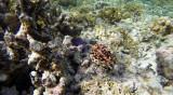 216 Mauritius island - Ile Maurice 2014 - G0851714_DxO Pbase.jpg