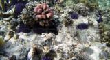 224 Mauritius island - Ile Maurice 2014 - G0861724_DxO Pbase.jpg